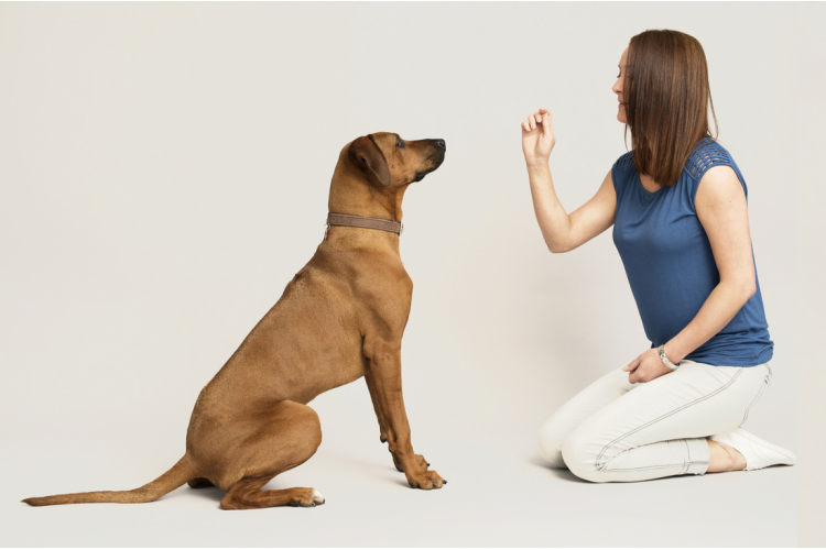 How to teach a dog to sit - Mighty Munch Blog