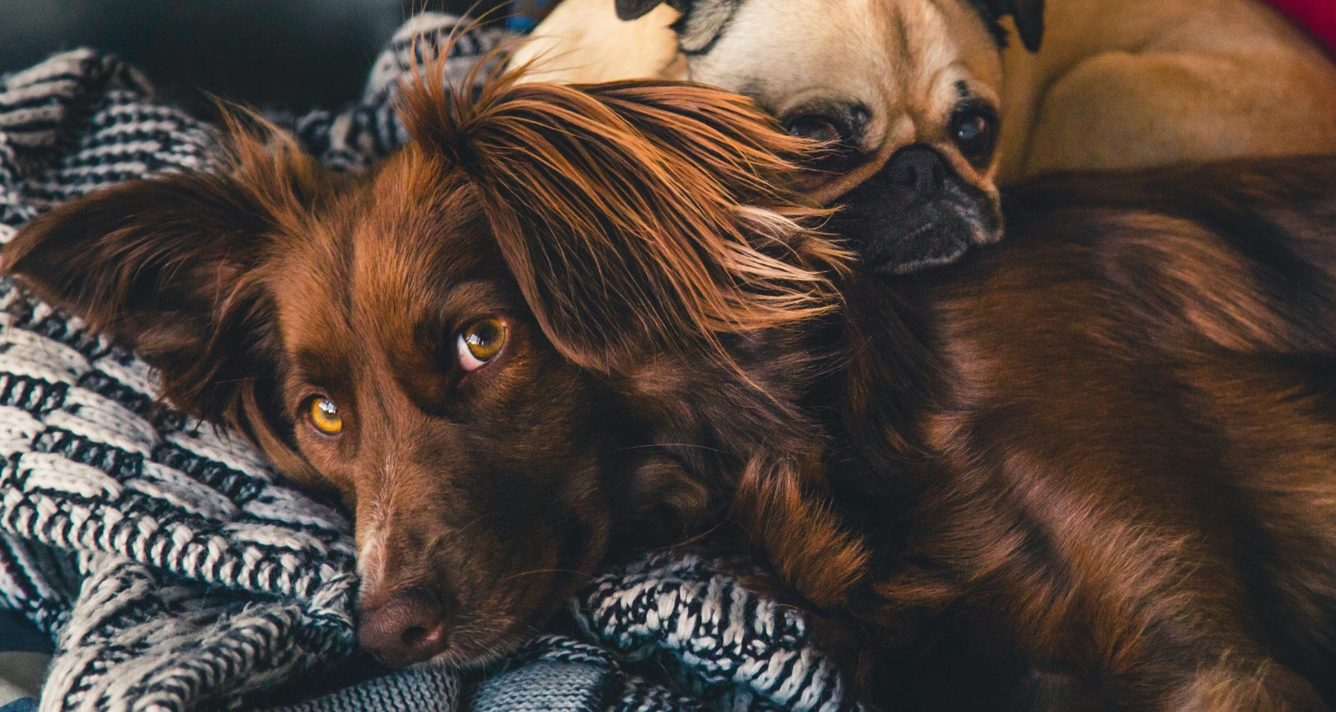 Ideal Glucosamine for Dogs Dosage