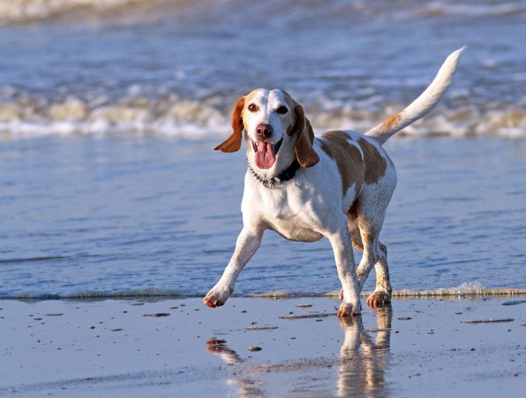 Puppy Vitamins for a Healthier Dog